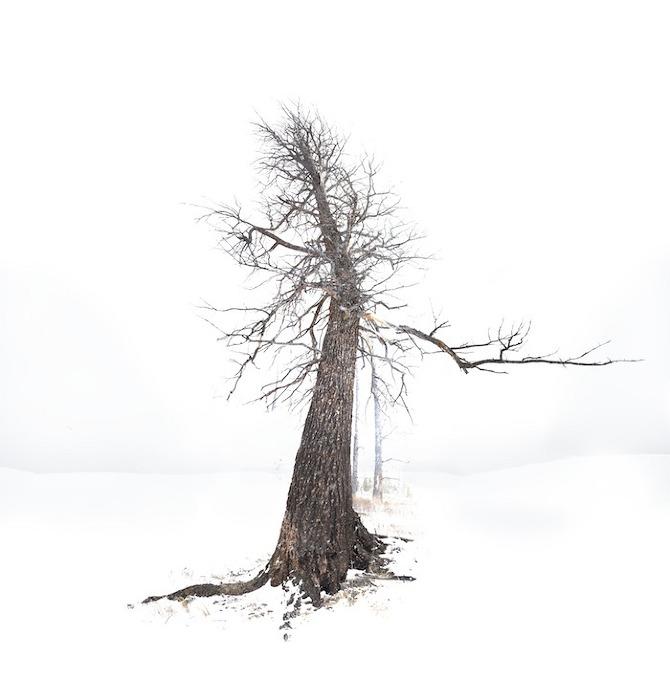 White Horizon - Michael Zimmerer