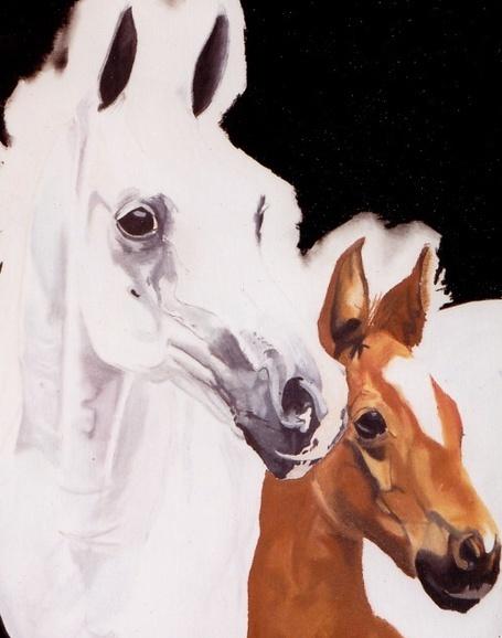 Zabu Stewart - Horses